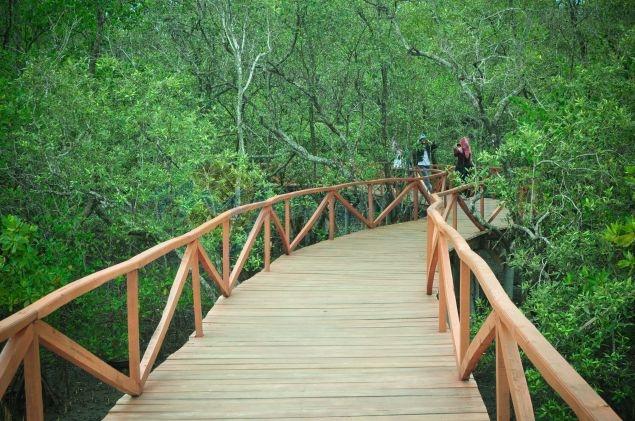 mangrove batu karas