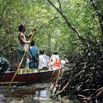 mangrove bali