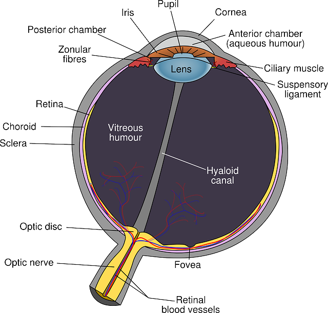 Fungsi Retina Mata